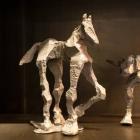 Glyphs – aluminum, Horse & Steer Duo 1