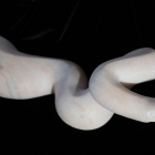Cobra: Marble Sculpture by Paulo Ferreira - right side front view